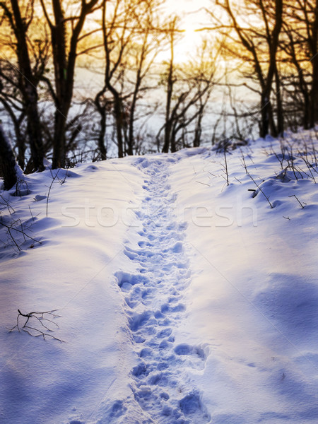 Footprints in snow Stock photo © w20er