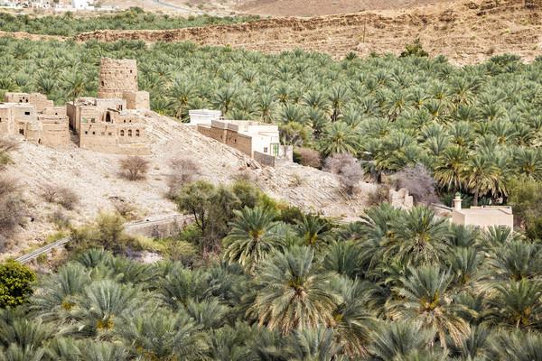 Lama imagem palms ruínas Omã céu Foto stock © w20er