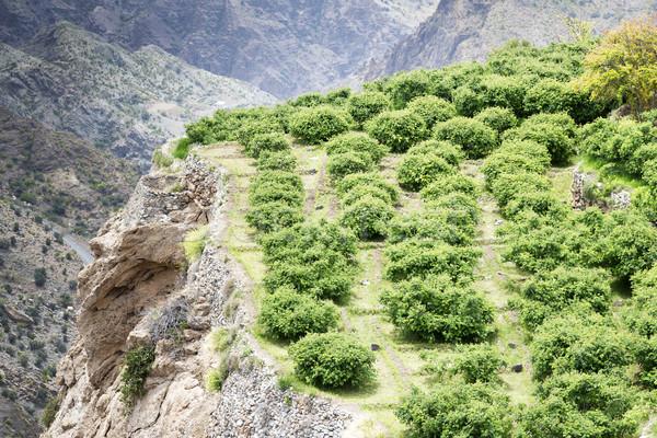 Umman plato görüntü manzara tarım teras Stok fotoğraf © w20er