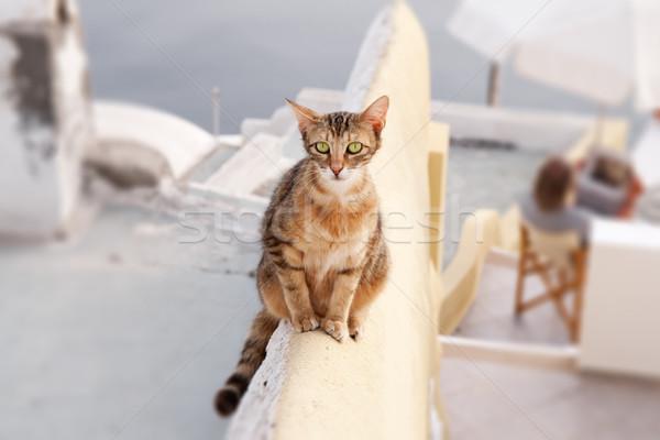 кошки изображение молодые стены Санторини солнце Сток-фото © w20er