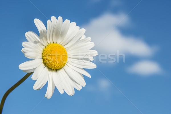 Stok fotoğraf: Beyaz · mavi · gökyüzü · bulutlar · bahar · ay · mavi