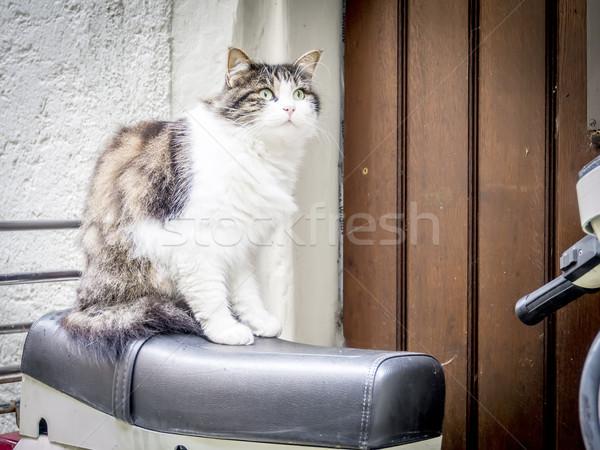 cat is sitting on motorbike Stock photo © w20er