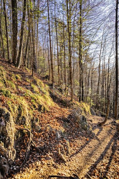 Ağaçlar alpler dağ orman manzara arka plan Stok fotoğraf © w20er