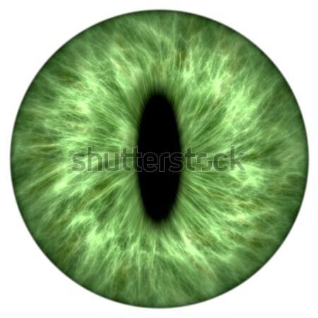 Stock photo: green animal iris