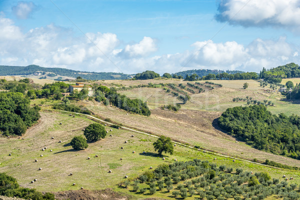 Landscape Tuscany near Volterra Stock photo © w20er