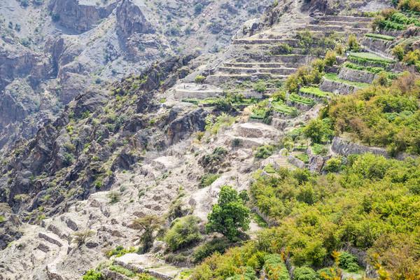 Oman Saiq Plateau Stock photo © w20er