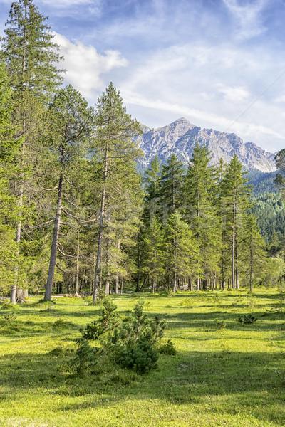 Alpy krajobraz obraz drzew rzeki lasu Zdjęcia stock © w20er