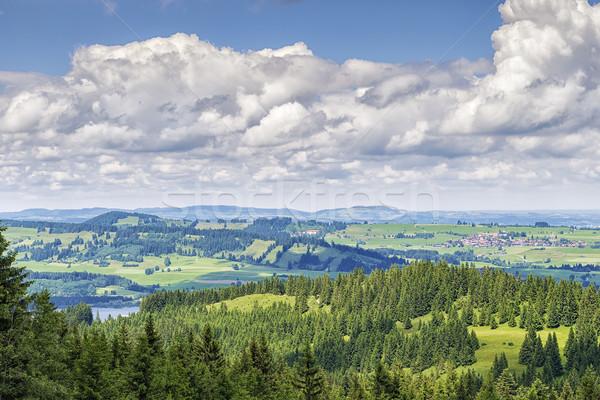 мнение подняться дерево весны лес природы Сток-фото © w20er