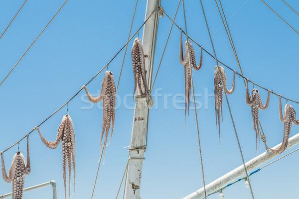 Hanged squid Stock photo © w20er