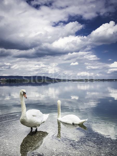 два берега озеро небе дерево свет Сток-фото © w20er