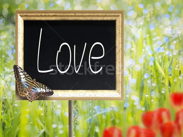 Quadro-negro texto amor prado primavera Foto stock © w20er