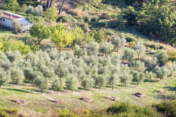 Coucher du soleil paysage Toscane image Italie automne Photo stock © w20er