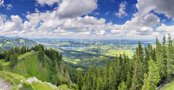 Панорама мнение дерево весны лес Сток-фото © w20er