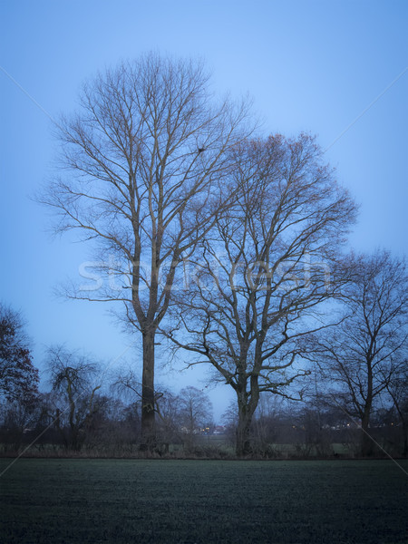 Trees evening mood Stock photo © w20er