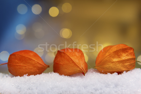 ışıklar görüntü bitki yapay kar bokeh Stok fotoğraf © w20er
