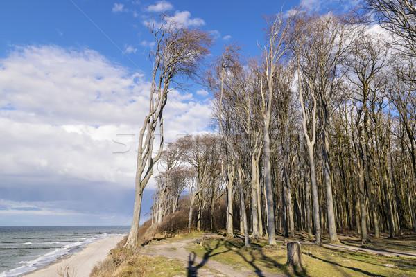 Fantasma floresta mar báltico imagem famoso costa Foto stock © w20er