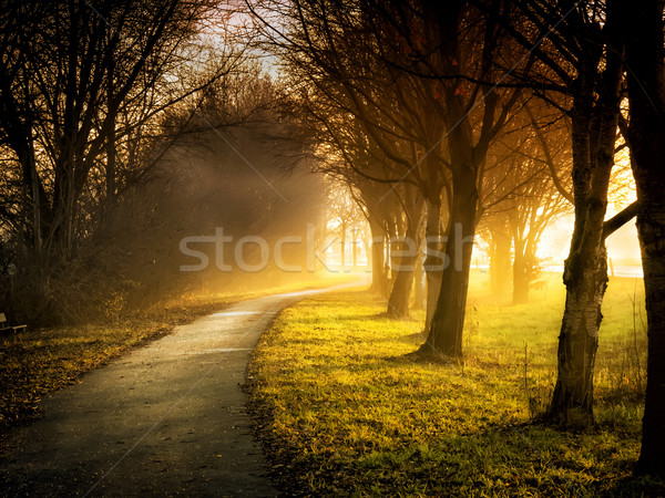 Trees with sunbeams Stock photo © w20er