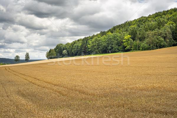 Korenveld Duitsland afbeelding hemel natuur bomen Stockfoto © w20er