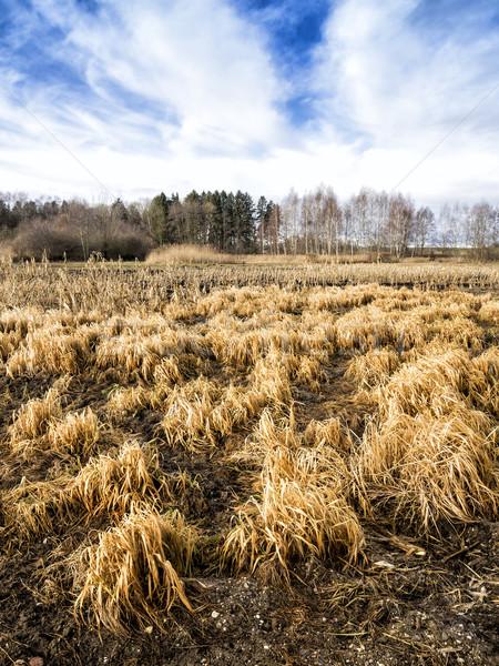 Grassland Stock photo © w20er