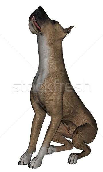 Great Dane Stock photo © Wampa