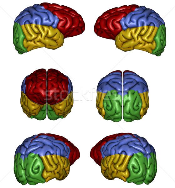 Foto stock: Cérebro · humano · 3D · prestados · branco · isolado · médico