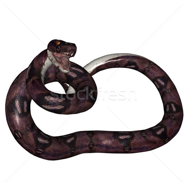 Snake Stock photo © Wampa