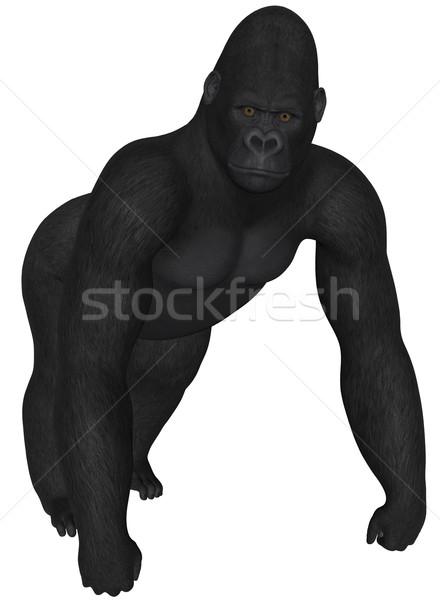 Gorilla 3D renderelt afrikai fehér izolált Stock fotó © Wampa