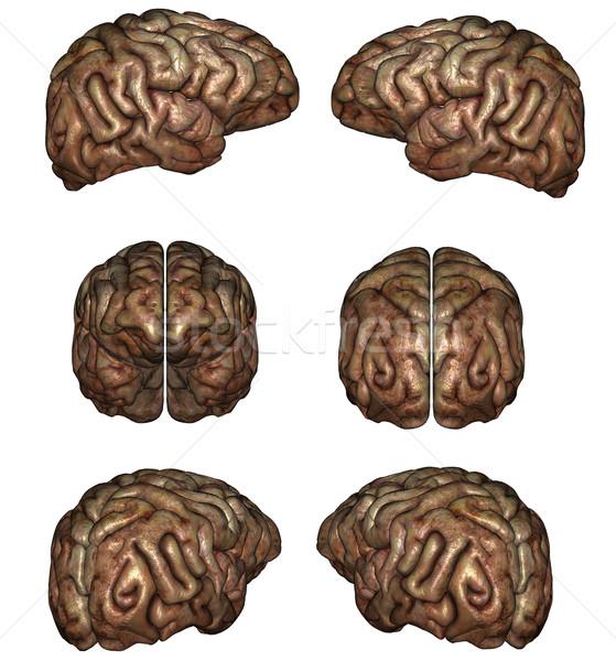 Cérebro humano 3D prestados branco isolado médico Foto stock © Wampa