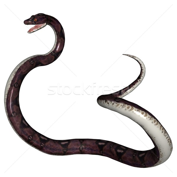 Snake Stock photo © Wampa