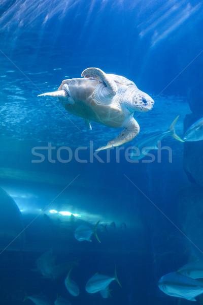 Tortuga natación tanque acuario naturaleza mar Foto stock © wavebreak_media