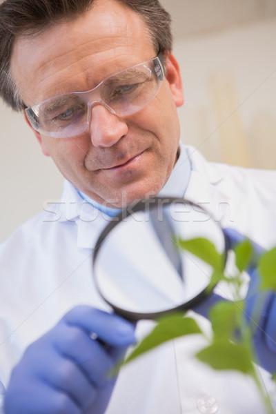 Scientist examining plants with magnifying glass  Stock photo © wavebreak_media