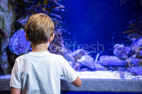 Young man looking at shrimp in a tank behind camera Stock photo © wavebreak_media