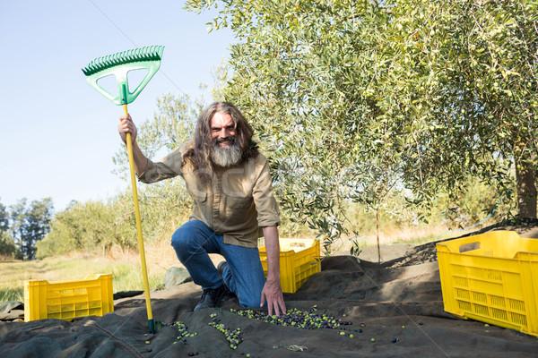Portret gelukkig landbouwer rack verzamelen olijven Stockfoto © wavebreak_media