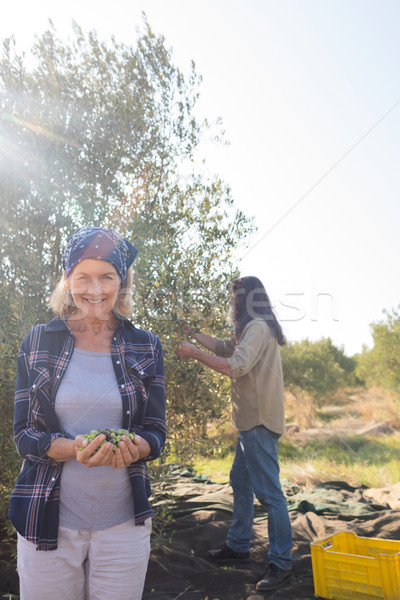 Woman holding harvested olives while man working in background Stock photo © wavebreak_media