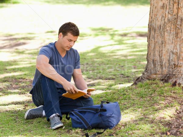 öğrenci okuma ders kitabı oturma park doğa Stok fotoğraf © wavebreak_media