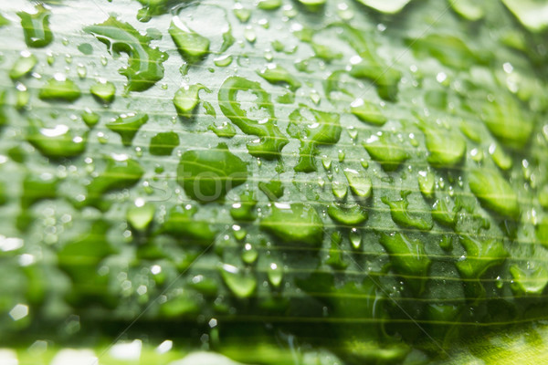 A close up of a leaf Stock photo © wavebreak_media