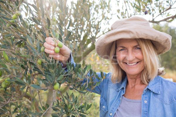 Gelukkig vrouw oogst olijven boom portret Stockfoto © wavebreak_media