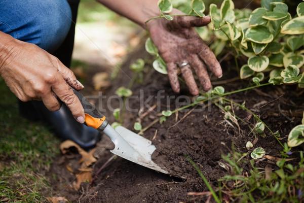 изображение старший женщину почвы рук лист Сток-фото © wavebreak_media