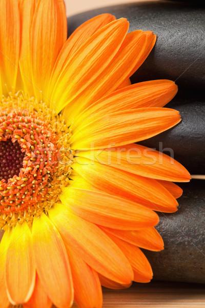 Zdjęcia stock: Czarny · kamienie · pomarańczowy · słonecznika