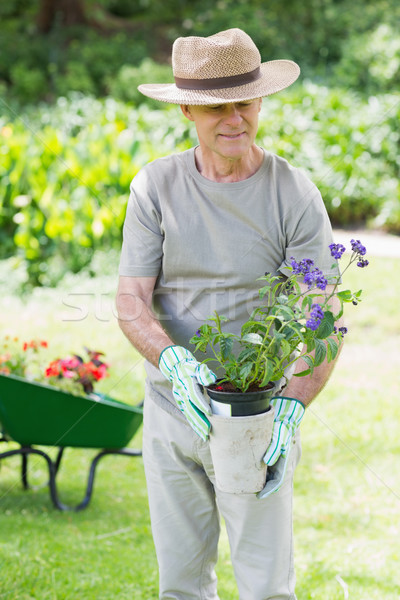 Mature man holding potted plant in garden Stock photo © wavebreak_media