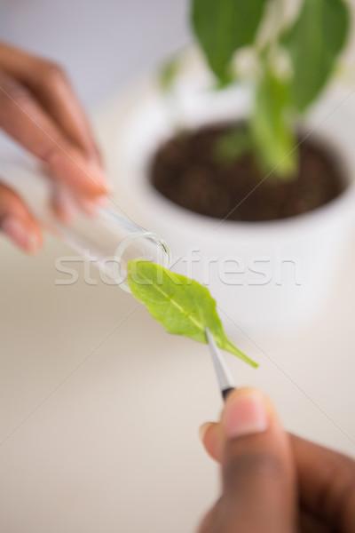 Bilim adamı bakıyor deney tüpü laboratuvar tıbbi yaprak Stok fotoğraf © wavebreak_media