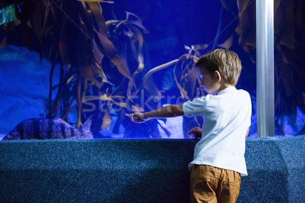 Junger Mann Scharfeinstellung groß Fisch Tank Aquarium Stock foto © wavebreak_media