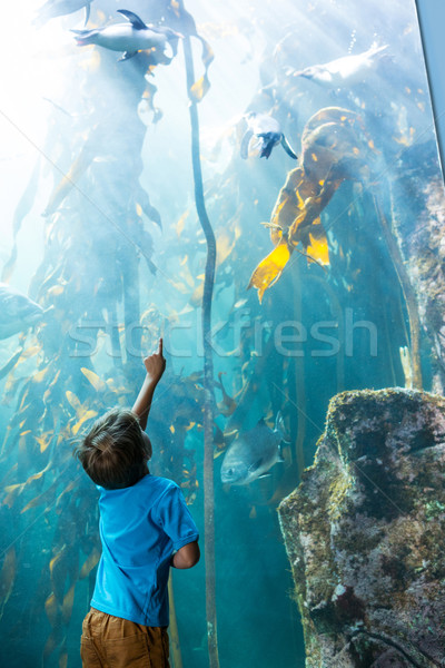Young man pointing a penguins in an illuminate tank  Stock photo © wavebreak_media