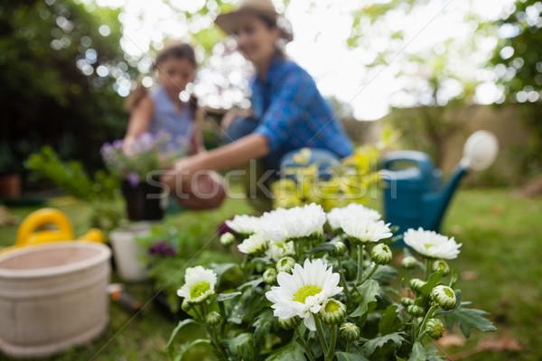Beyaz çiçekler pot anne kız Stok fotoğraf © wavebreak_media