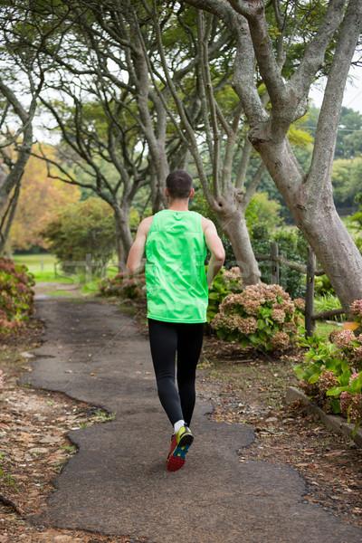 Uprawiający jogging jogging parku widok z tyłu drzewo charakter Zdjęcia stock © wavebreak_media