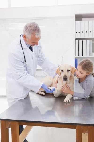 ветеринар собака владелец медицинской служба Сток-фото © wavebreak_media