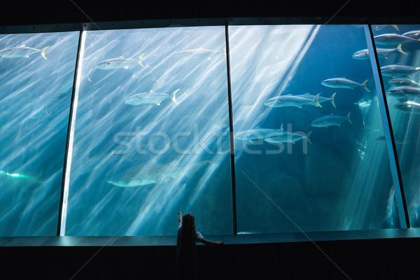 Nina mirando peces tanque acuario nino Foto stock © wavebreak_media