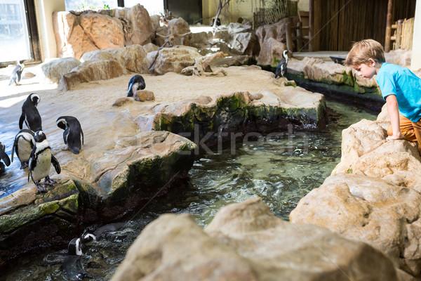 молодым человеком скалолазания камней посмотреть глядя природы Сток-фото © wavebreak_media