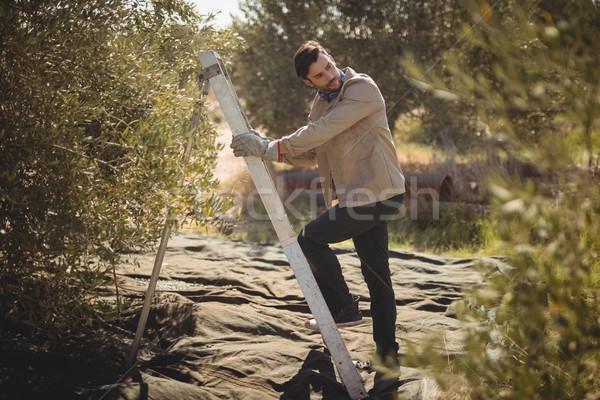 Knappe man klimmen ladder olijfolie boerderij Stockfoto © wavebreak_media