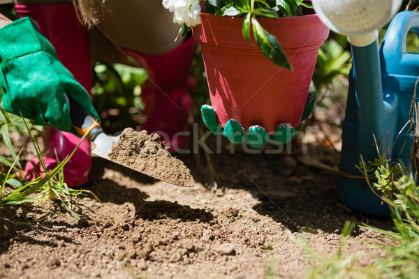 Close-up of woman planting sapling in garden Stock photo © wavebreak_media